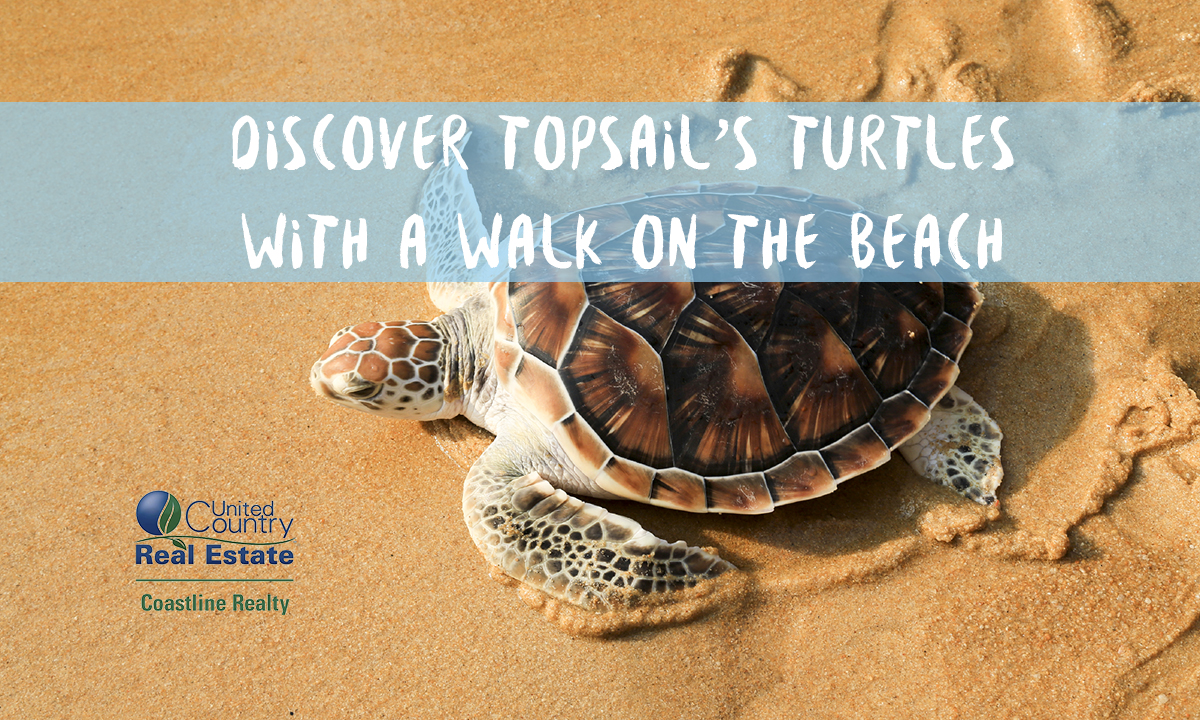 Walk the beach in Topsail and See Turtles