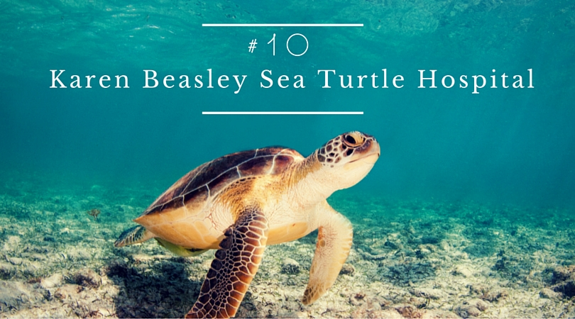 Visit the Karen Beasley Sea Turtle Hospital