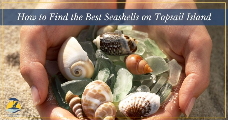How to Find the Best Seashells on Topsail Island | Coastline Realty Vacations