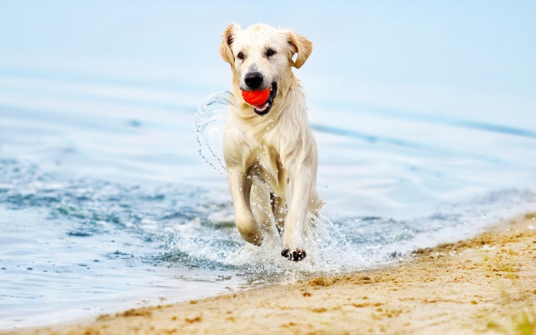 dog playing with red ball on the beach | Coastline Realty