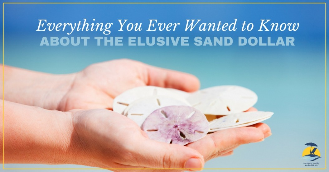 Everything You Ever Wanted to Know About the Elusive Sand Dollar | Coastline Realty Vacations