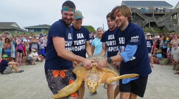 sea turtle being rescued | Coastline Realty Vacations