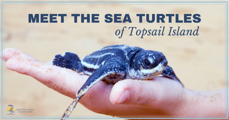 Sea turtles | Coastline Realty Vacations