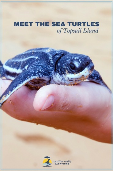 Meet the Sea Turtles of Topsail Island | Coastline Realty Vacations