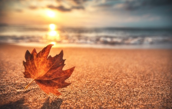 leaf on the beach | Coastline Realty