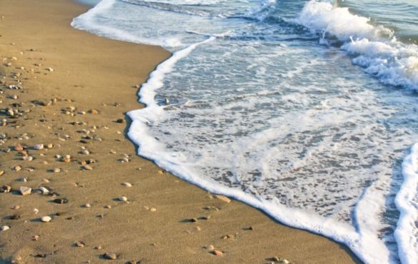 seashells on the shoreline | Coastline Realty