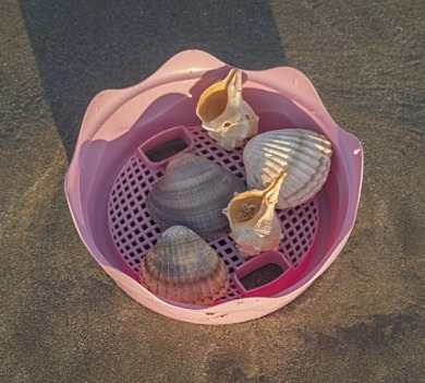 sifter full of shells on the beach | Coastline Realty