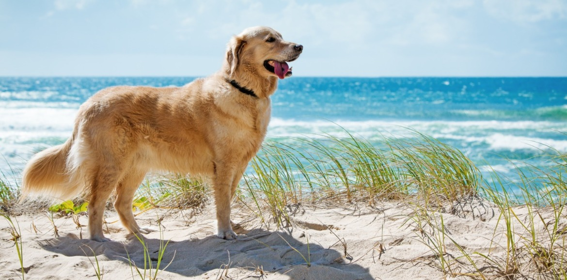 dog on the beach | Coastline Realty