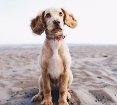 dog on a beach | Coastline Realty Vacations